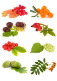 Collection plants Royalty Free Stock Photo