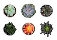 Collection of plants and cacti. On white Royalty Free Stock Photo