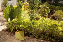 A collection of plants in the courtyard Stock Image