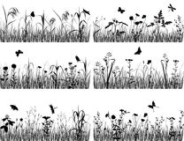 Collection of plants. Collection of silhouettes of flowers and grasses Royalty Free Stock Photos