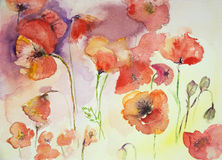 Collection of poppies against a multi colored background. Stock Photos