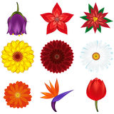 Collection of popular and exotic flowers Stock Image
