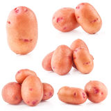 Collection of potatoes Stock Images