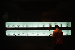 Collection of preserved reptiles and bones in Musium. Korat zoo, Thailand Royalty Free Stock Images