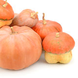 Collection pumpkin Stock Photo