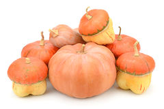 Collection pumpkin Royalty Free Stock Photos
