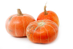 Collection of Pumpkins Royalty Free Stock Image