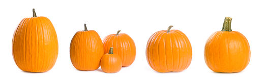 Collection  of Pumpkins Isolated on White Royalty Free Stock Image