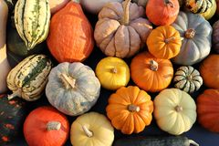 A collection of pumpkins and squash. royalty free stock photo
