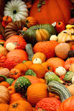 Collection of pumpkins, squash and gourds Royalty Free Stock Photo