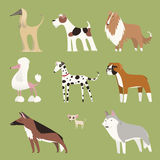 Collection pure de chien de race illustration stock