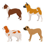 Collection of purebred dogs isolated on white Stock Images