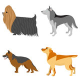 Collection of purebred dogs Royalty Free Stock Images