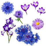 Collection of purple and blue flowers Royalty Free Stock Image