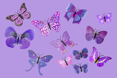 Collection Of Purple Fantasy Butterflies. Collection Of  Purple Fantasy Butterflies Stock Photo