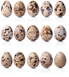 Collection of quail eggs. Isolated on white background Royalty Free Stock Photo