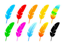 Collection of quills Royalty Free Stock Photo