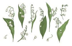 Collection réaliste du muguet Bourgeons, feuilles tirées par la main et tiges réglés Illustration colorée de vecteur illustration de vecteur