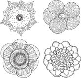 Collection réglée avec les fleurs tropicales Vecteur graphique tiré par la main illustration libre de droits