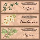 Collection réglée d'Aromatherapy Photos libres de droits