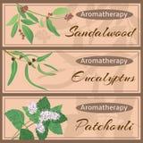 Collection réglée d'Aromatherapy illustration de vecteur