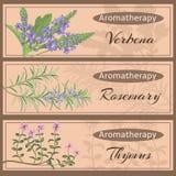 Collection réglée d'Aromatherapy illustration stock