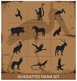 Collection réglée de silhouette de symboles de faune de safari Photos stock