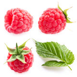 Collection. raspberries and leaf isolated on white background Royalty Free Stock Image