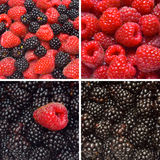 Collection of raspberry and blackberry backgrounds Stock Images