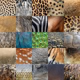 Collection of many real wild animals skin Stock Photos