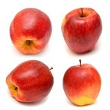 Collection of red apples Royalty Free Stock Photography