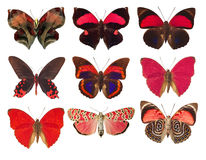 collection of red butterflies on a white background Stock Photos