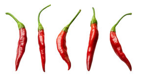 Collection red chili peppers Royalty Free Stock Images