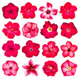 Collection of red flowers isolated on white background. Stock Image