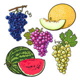 Collection of red, green, purple grapes, melon and watermelon Royalty Free Stock Image