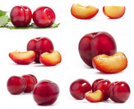 Collection of red plum Stock Images