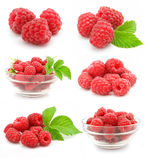 Collection red raspberry fruits isolated royalty free stock images