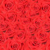 Collection of red roses. Collection of romantic red roses Royalty Free Stock Photography