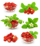Collection of red strawberry fruits with leafs. Collection of red strawberry fruits with green leafs isolated on white background Royalty Free Stock Images