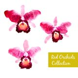 Collection of red watercolor orchids Royalty Free Stock Photos