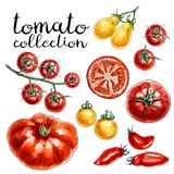 Collection of red and yellow tomatoes. royalty free illustration