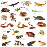 Collection of reptiles and amphibians Stock Photography