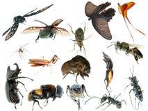 Collection réglée d'insecte Images stock