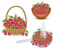 Collection. A rich harvest of cherries. Fresh berries in a basket, washed under a stream of water, put in a bowl. The fruit is vector illustration