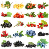 Collection of ripe berries Stock Photos