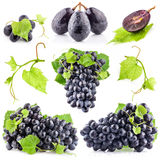 Collection of Ripe dark grapes Royalty Free Stock Photos