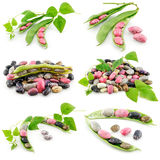 Collection of Ripe Haricot Beans with Seed Stock Images