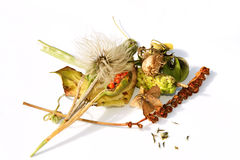Collection of ripe seedheads Stock Image
