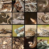 Collection of romanian vipers Stock Photography