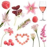 Collection rose photo libre de droits